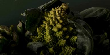 Romanesco cabbage in close-up